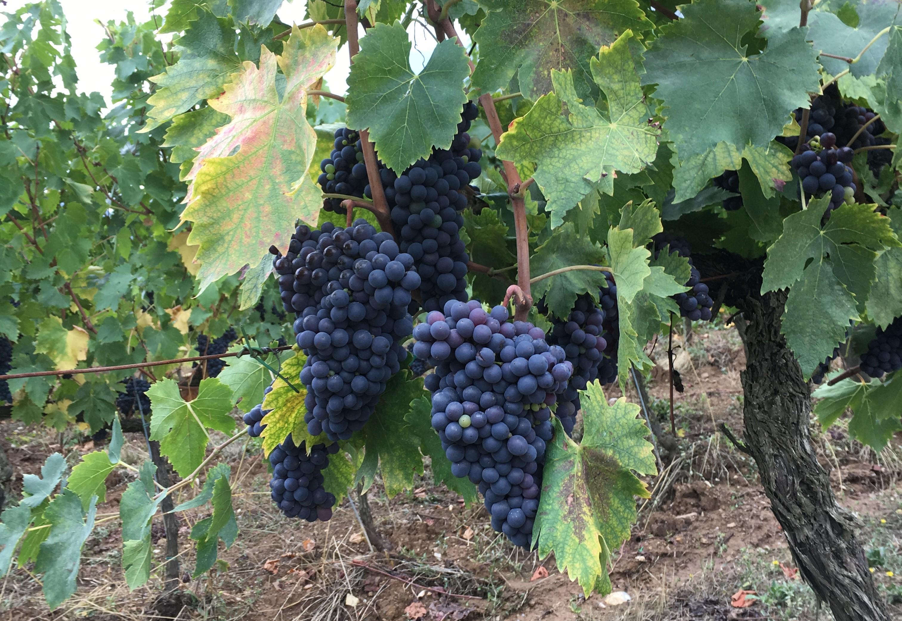 altiero-druer